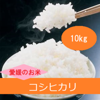 令和元年  愛媛県産     コシヒカリ 玄米 10kg