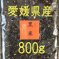 黒米  800g       愛媛県産  送料無料
