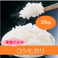 令和元年 愛媛県産     コシヒカリ 玄米 30kg