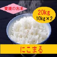 令和元年 愛媛県産     にこまる 白米 20kg