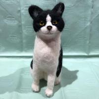 白×クロ  ハチワレ猫