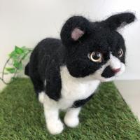 きりりチョビひげ猫☆