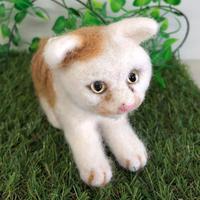 茶白の猫☆