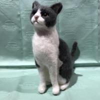 白×グレー  ハチワレ猫