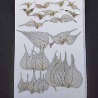 カラムシの葉2