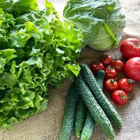 <発送>野菜とトマトパック