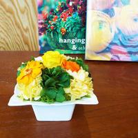 プリザーブドローズとジニアのアレンジメントM/白陶器【sun orange】