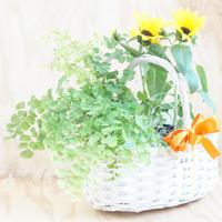 インテリアグリーン バスケットM(グリーン鉢2種)