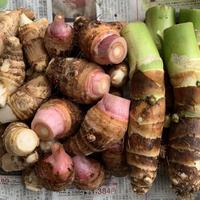 初収穫★里芋食べ比べset  農薬 化学肥料不使用