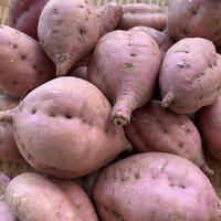 発送10月3日頃★いきいき五島の安納芋3キロ無農薬栽培