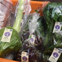 【松本家の旬のお野菜セット6月前半】 ※送料クール冷蔵便代込
