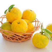 【marimoの柚子のウィークエンドケーキレシピ付き】青山農園の有機JAS認定 柚子1Kg(8-12玉程度)