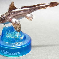 09.ギンザメ
