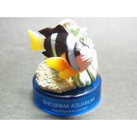 新江ノ島水族館への誘い2 04.クマノミ