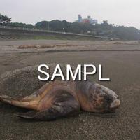 海亀(3)