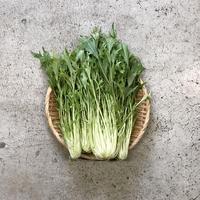 【島根有機野菜】 サラダ水菜