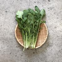 【島根有機野菜】 ルッコラ