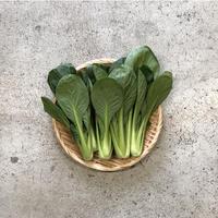 【島根有機野菜】 小松菜