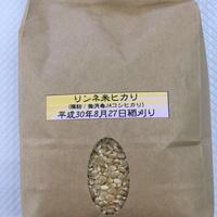 リンネ玄米ヒカリ(コシヒカリ)