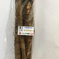 有機サラダごぼう(転換中)