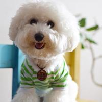 半袖ボーダーTシャツ (黄緑)