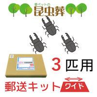 【3匹用】昆虫葬郵送キットワイド