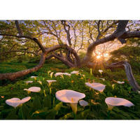 29906 Marc Adamus : Magic Forests - Calla Clearing