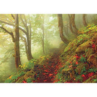 29519  Magic Forests : Path