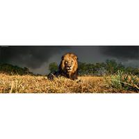 Lion : Ed. Humboldt - 29518