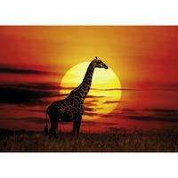 29688  Sunlight : Sunny Giraffe