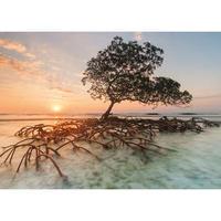 29856  Ed. Humboldt : Red Mangrove