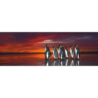 29858  Ed. Humboldt : King Penguins