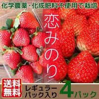 送料無料 有機いちご恋みのり イチゴ4パック レギュラーパック入り 熊本県産