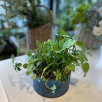 育てやすいグリーンのふんわり寄せ植え