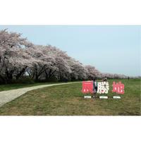 旅行レポートデータ 「東北道東の桜満開を追う旅」