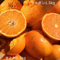 【3kg】味くらべセット(デコポン&せとか)