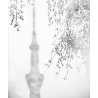 オルテア 写真プリント『Tokyo Prism World Kameido 01』