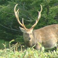 Hunting & Fishing in Hokkaido(Guide  9H)