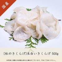 生白いきくらげ(500g)