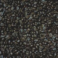 珈琲豆 ブラジル