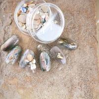 個数限定品  new petit bijou shells  nude / プティビジューシェル ヌード