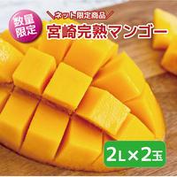 日南産完熟マンゴー:2Lサイズ×2パック