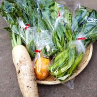 お得! 旬の野菜セット M 共同購入(2~4セット)※2つ以上でご注文下さい