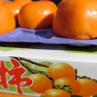 上等富有柿 中玉 12玉