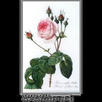 【ルドゥーテ】ミニ・クリア・ファイル 各柄
