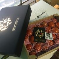 健太トマト プラスワン プレゼントボックス ラージ