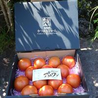 健太トマト ミディアムボックス