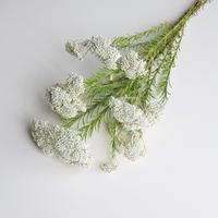 ライスフラワー 白