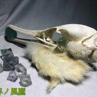 ウミウ頭骨の髪飾り