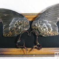 キジバトの翼イヤーフック